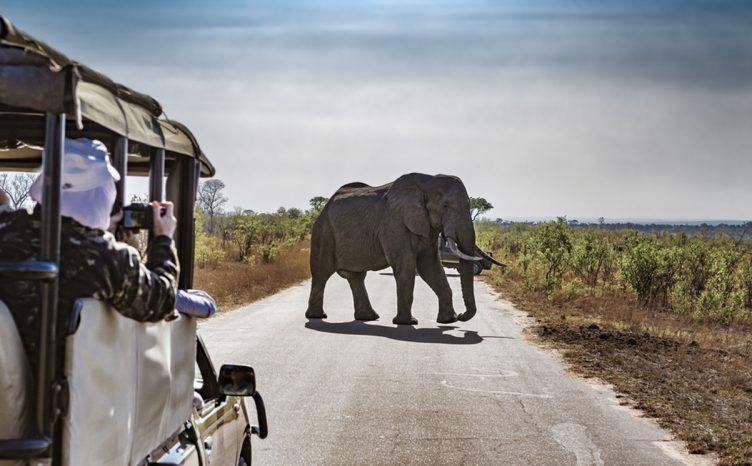Luxury Safari Elephant Attack Accident